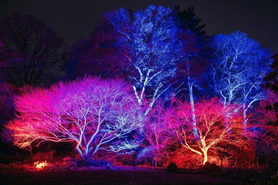 Glow 2020 at RHS Hyde Hall